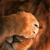 mithriltabby: Lion facepalm (Lion Facepalm)