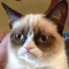 mithriltabby: Grumpy Cat (Grumpy)