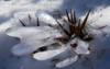 kenga1ru: (Snow flower)