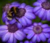 kenga1ru: (purple)