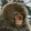 ign: (snow_monkey)