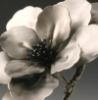 magnoliasteel: (pic#10872930)