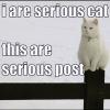 i_phoenix: (serious cat)