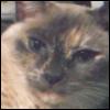 lavendertook: (saki smiling)