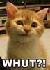 caffeinerabbit: (Whut?!)