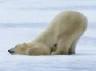 dendren: (Bottom Bear)