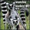 leaping_lemurs: (Lemurs Looking by the_reverand)