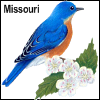 dragonsong: (eastern bluebird missouri)