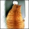 amandascats: (fat cat)