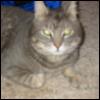 amandascats: (day 2) (Default)