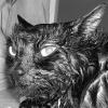 ocschwar: (angrycat)