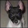 ladynorbert: (dogsitting)