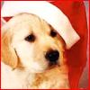 lapiccolina: (Xmas Puppy)