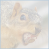 timmc: (squirrel acorn nut free license)