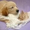 redhedlvr2: (Cute yarn)