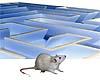 sylphon: (rat_in_a_maze)