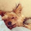 tat_oshka: (жизнь собачья)