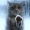 jenna_marianne: (cat in rain)