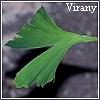 virany: Ginkgo biloba leaf, in my garden. (Default)