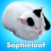 uberniftacular: (Personal: Sophieloaf)
