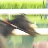murakozi: (derby)