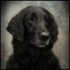 zubiemom: (Flyer2009)