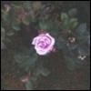 amethyst_lilac: (pic#10883718)
