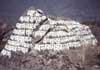 gategrrl: (Bhuddist Rock in Nepal)