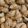 gategrrl: (Shells Leopard)