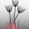 teragramm: (tulips)