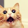 leiaprincess: (say whaaaaa?!)