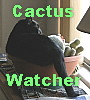 cactuswatcher: (Cat Bowl)