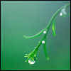 gem225: (green tendril with rain by rahalia_cat)