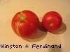 gem225: (w & f:  tomatoes)