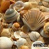 gem225: (seashells by lanning)