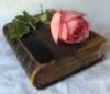 hrj: (Alpennia book-rose)