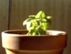 leahbobet: (gardening)
