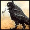 ianuk: (crow)