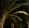 wavingpalms: (palmy)