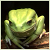 eye_of_a_cat: (frog)