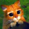lulay75: (gat amb botes)