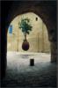n_v: (дерево)