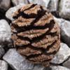 ewx: (pinecone)