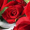 avictoriangirl: (flower)