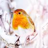 emo_episkey: (Winter Bird)