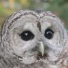 wantedonvoyage: (owl)