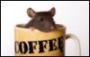 ratseal: (Default)