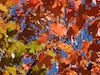 dchenes: (leaves)