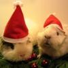 kejn: (Christmas Cuties)