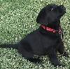 kumir_k9: (Puppy)